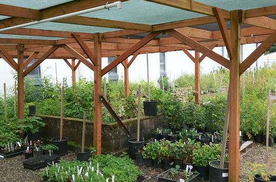 About The Nursery