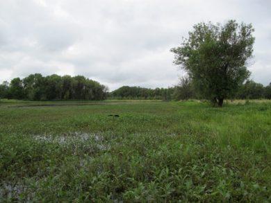 Hogan Ranch