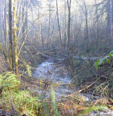 Milton Creek Large Woody Debris Restoration