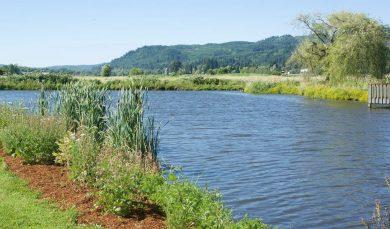 Springlake Community Pond Restoration
