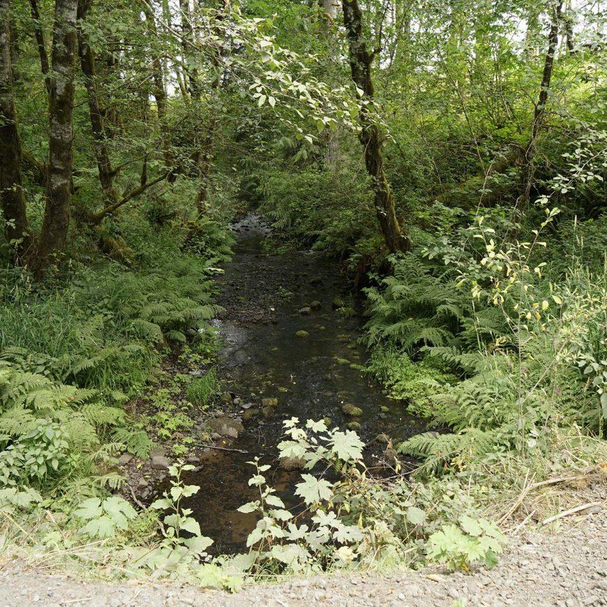 Upper Milton Creek Large Wood Enhancement