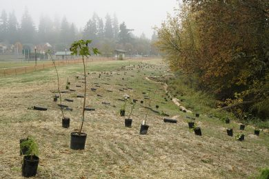 South Scappoose Creek Restoration
