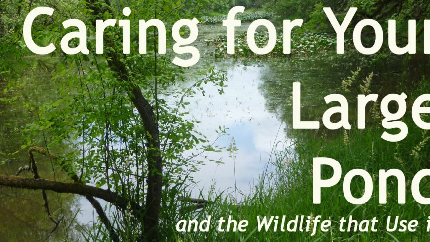 Caring for Your Large Pond