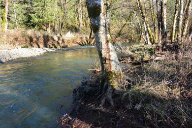 Lower North Scappoose Creek Restoration