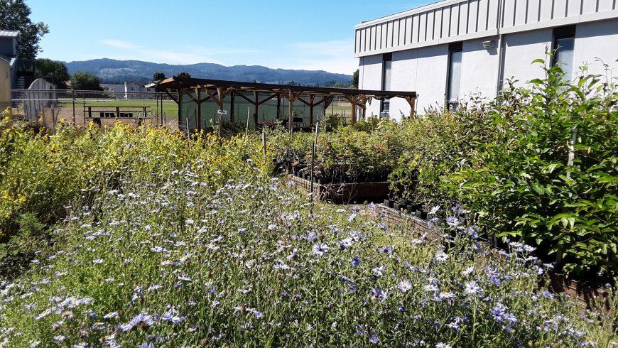 Native Plant Nursery Sale – October 2021