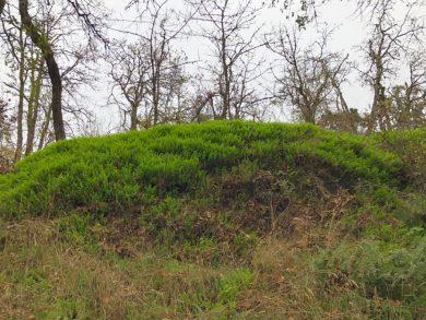 Nob Hill Nature Park Trail Enhancement